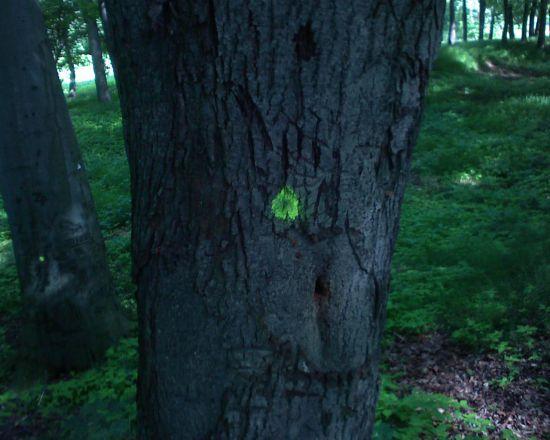 randki z jednego drzewa serwisy randkowe z Hollywood