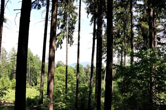 Ścieżka edukacyjno – przyrodnicza Wzgórza Kiełczyńskie