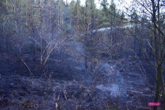 Pożar lasu na Radunii