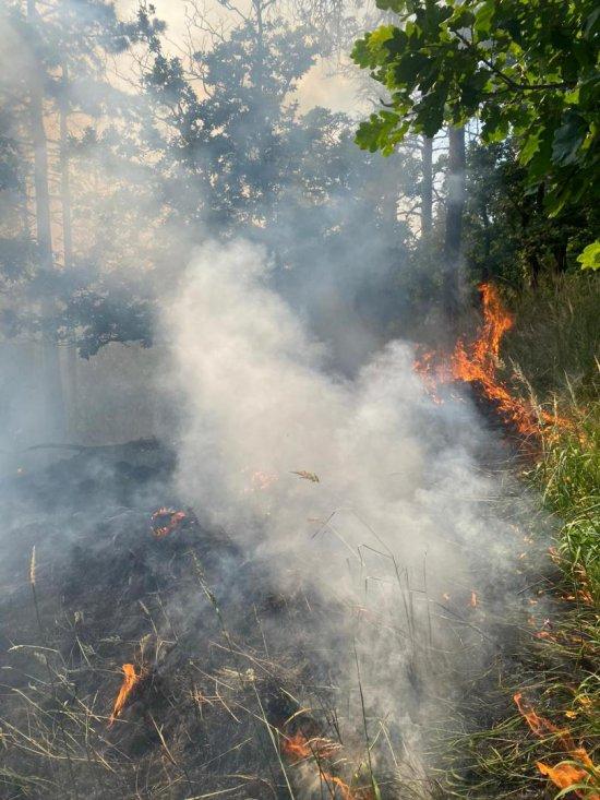 Pożar lasu na Górze Radunia