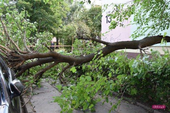 Drzewo spadło na mercedesa