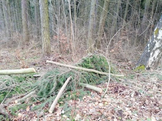 Władze Nowej Rudy wystosowały apel w sprawie podjęcia działań mających na celu wstrzymanie wycinki drzew na terenach leśnych