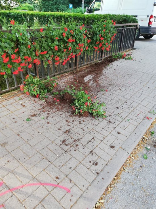 Kolejny akt wandalizmu w Dusznikach-Zdroju. Tym razem zniszczone zostały donice z kwiatami na moście przy Placu Warszawy.