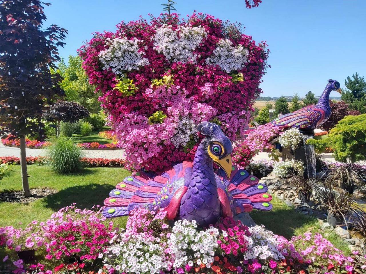 Na powierzchni ponad 20.000 metrów kwadratowych można podziwiać oszałamiającą ilość, ponad 100.000 kwiatów jednorocznych.