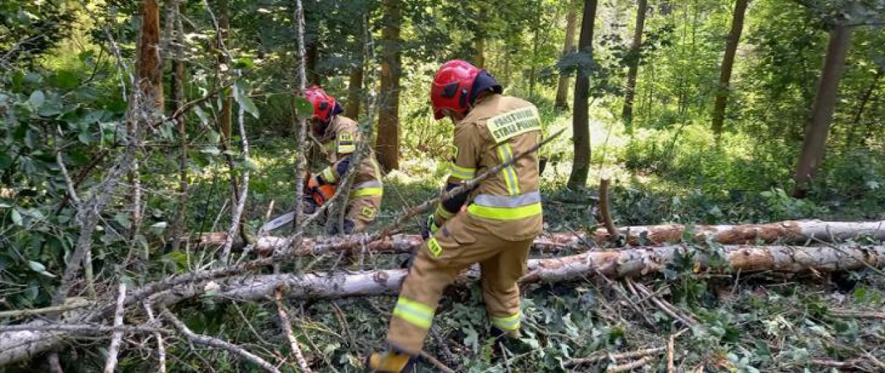 Strażacy uczestniczyli w ćwiczeniach doskonalących umiejętności w zakresie obsługi pilarek łańcuchowych.