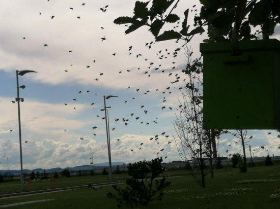 [FOTO, WIDEO] Rój pszczół na terenie fabryki