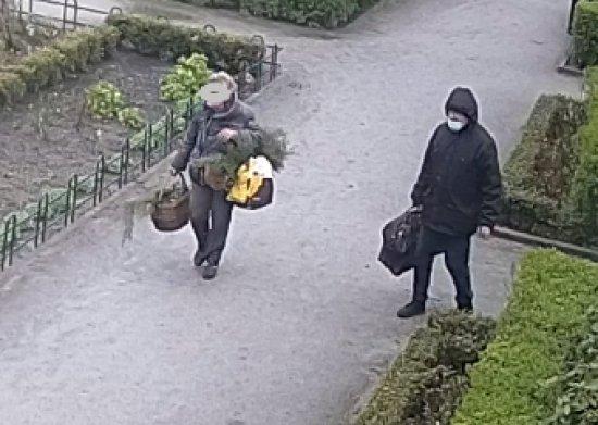 [FOTO] Kępami wyrywała kwiaty z klombów w Ogrodzie Różanym
