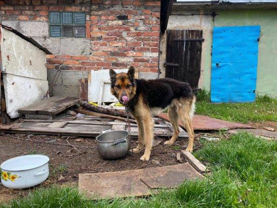 DIOZ odebrał zagłodzonego psa mieszkance Pastuchowa