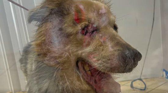 Tragiczny stan psa odebranego z Osiedla Młodych w Świdnicy [DRASTYCZNE ZDJĘCIA]