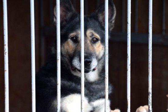 Kiermasz na Pogodnej 3 - pożegnanie lata ze schroniskiem dla zwierząt