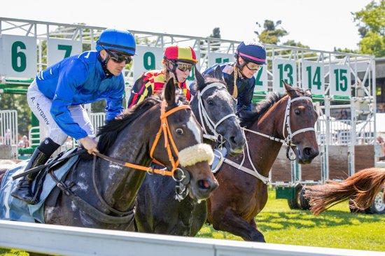 Kolejny dzień wyścigów konnych na Partynicach