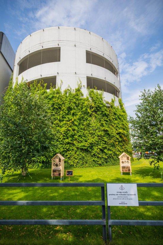 Hotele dla owadów w centrum Wrocławia