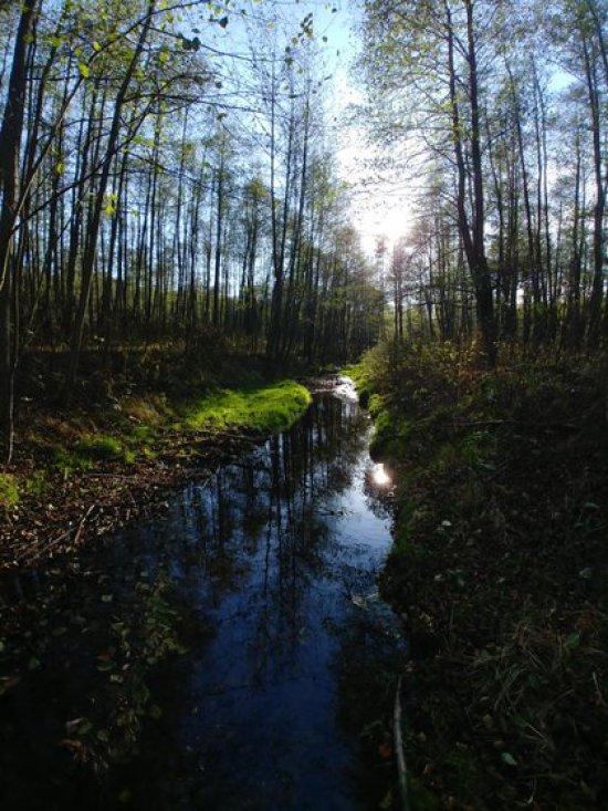 Niepozornie wyglądająca rzeka Trująca poniżej Złotego Stoku, charakteryzuje się ponad 100- krotnym przekroczeniem dopuszczalnej dla wody pitnej zawartości arsenu .