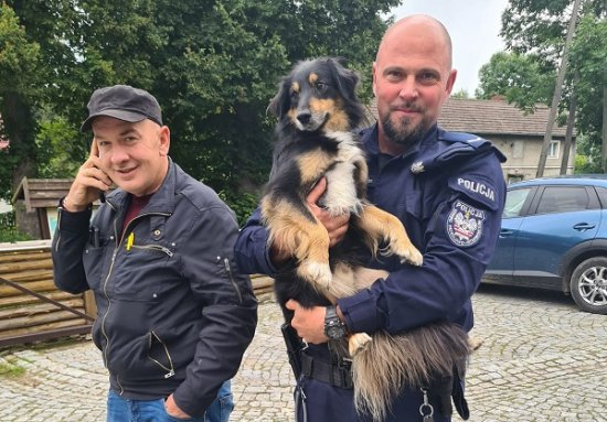 pies policja
